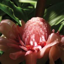 Second Place: Loretta Klingenberg - Cairns Botanical Beauty