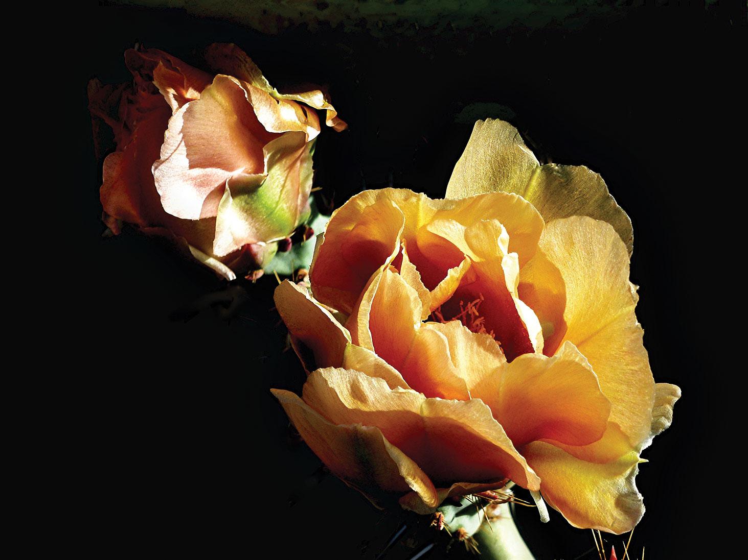 Third Place: Christel Phillips - Cactus Flower