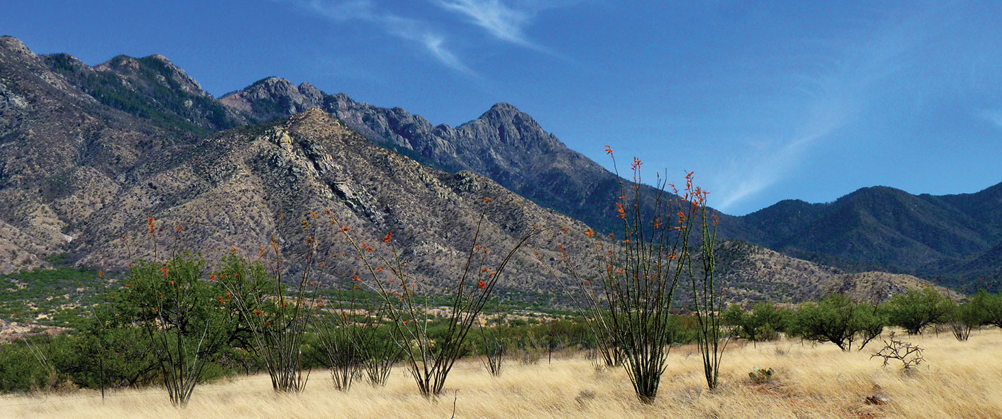 Mt. Wrightson over Madera Canyon with Ocotillos