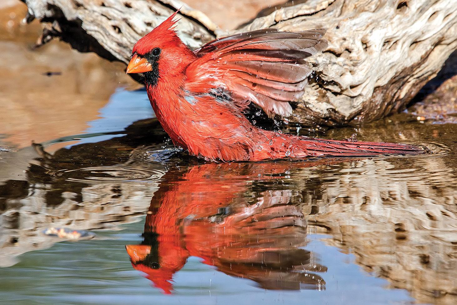 First Place: Jeff Krueger - Bird Bath