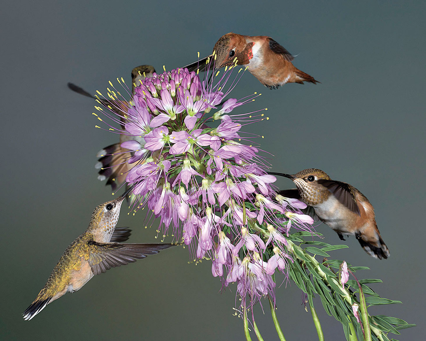 Jon Williams placed third for his image Humming Birds Sharing
