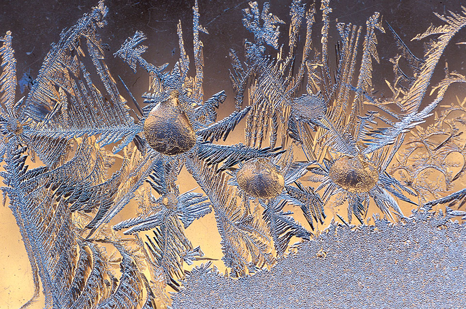Larry Michael won Second Place with his photo Window Frost.