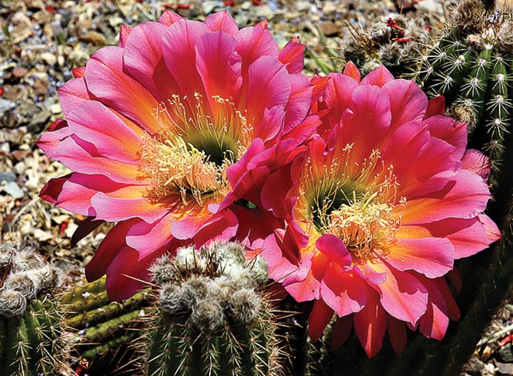 Third place, Lois Haglund Twin Blooms