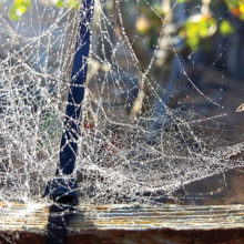 First place went to Pete Murphy and his photo, Spider Web.