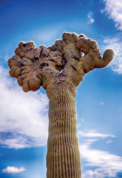 """2nd Place, entry 05, Tom Reiman's """"Chaotic Cactus"""""""