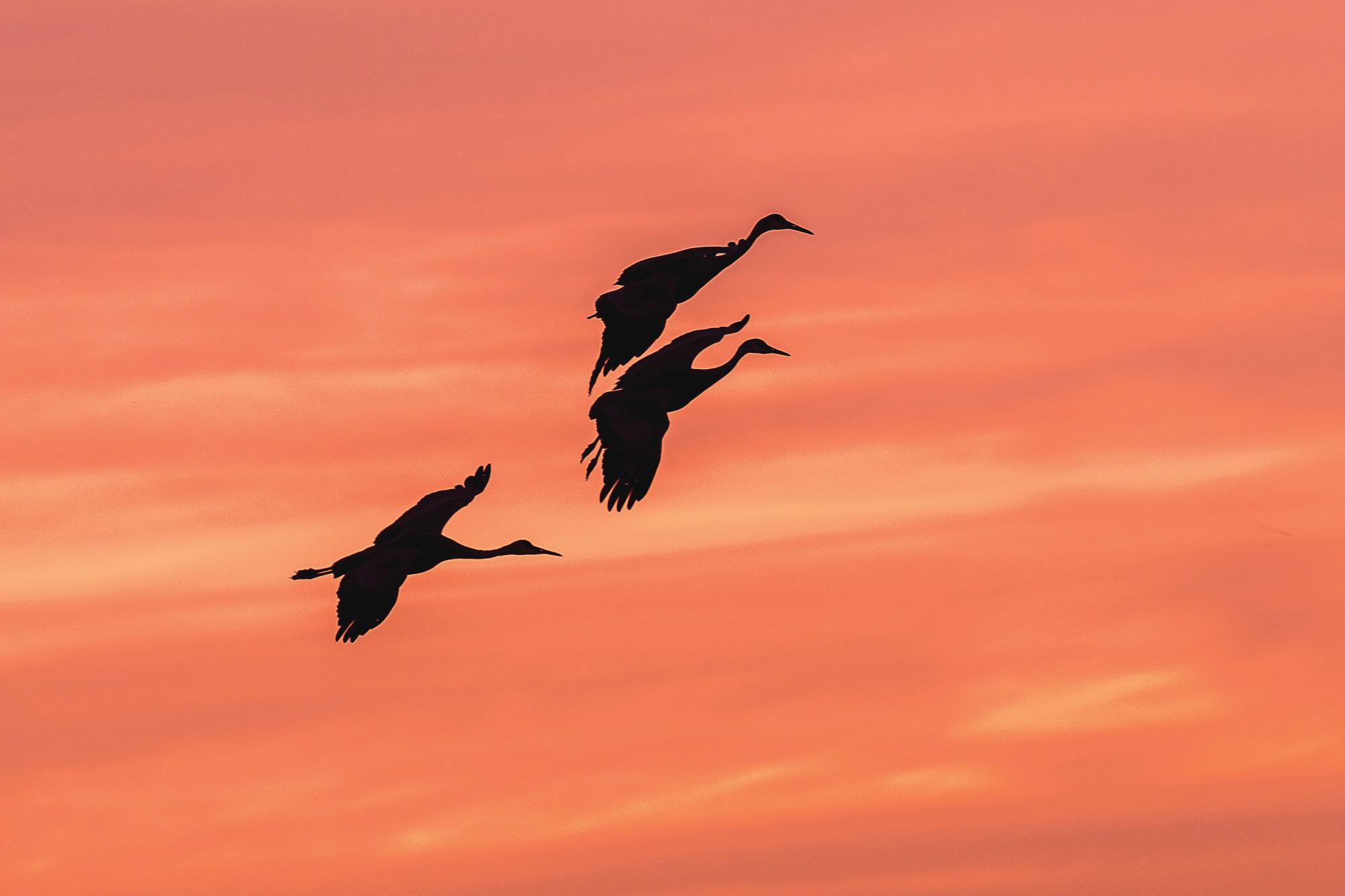Second place, Bosque Cranes by Tom Cadwalader